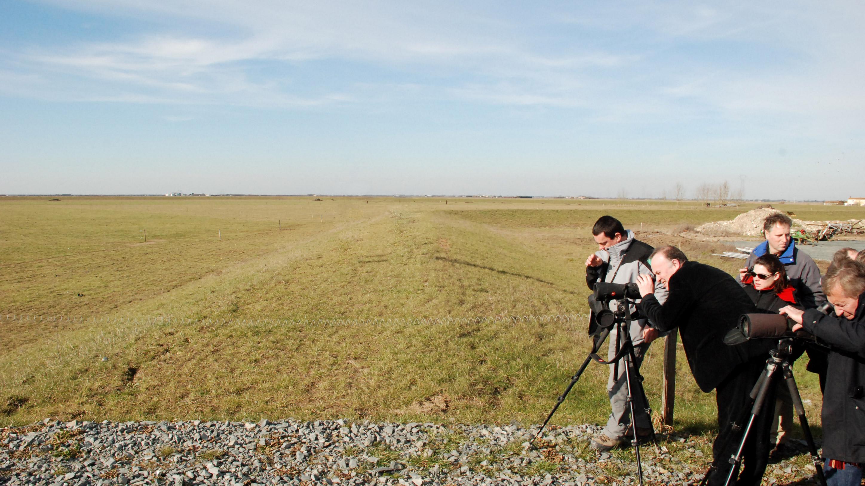 Observation des oiseaux près de la ferme de La PréE Mizottière - Life baie de l'Aiguillon