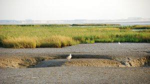 Les pré-salés du port du Pavé sur l'estuaire de la Sèvre niortaise à Charron. Marais poitevin