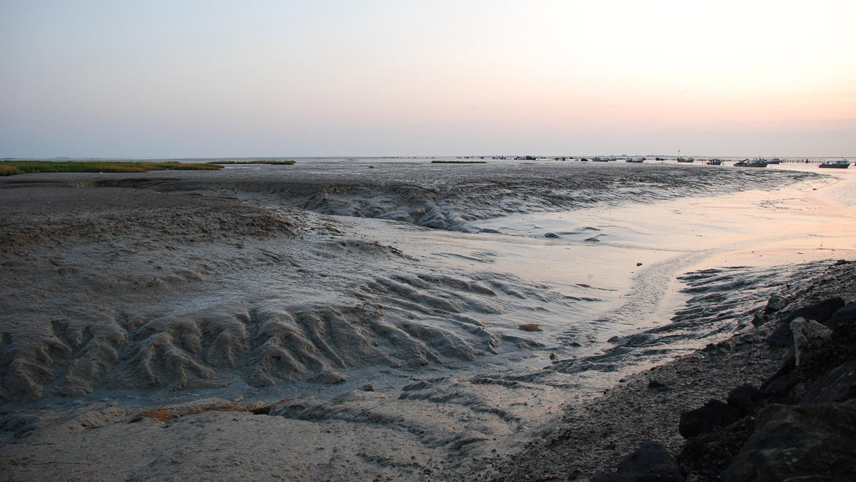 La vasière du port du Pavé à Charron - Life baie de l'Aiguillon